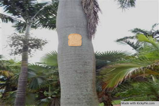 Bread Stapled to a palm tree