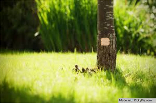 Bread stapled to a tree in the grass