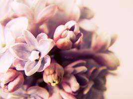 Remember me . . by L0rii