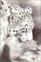 snow leopard by makebelief