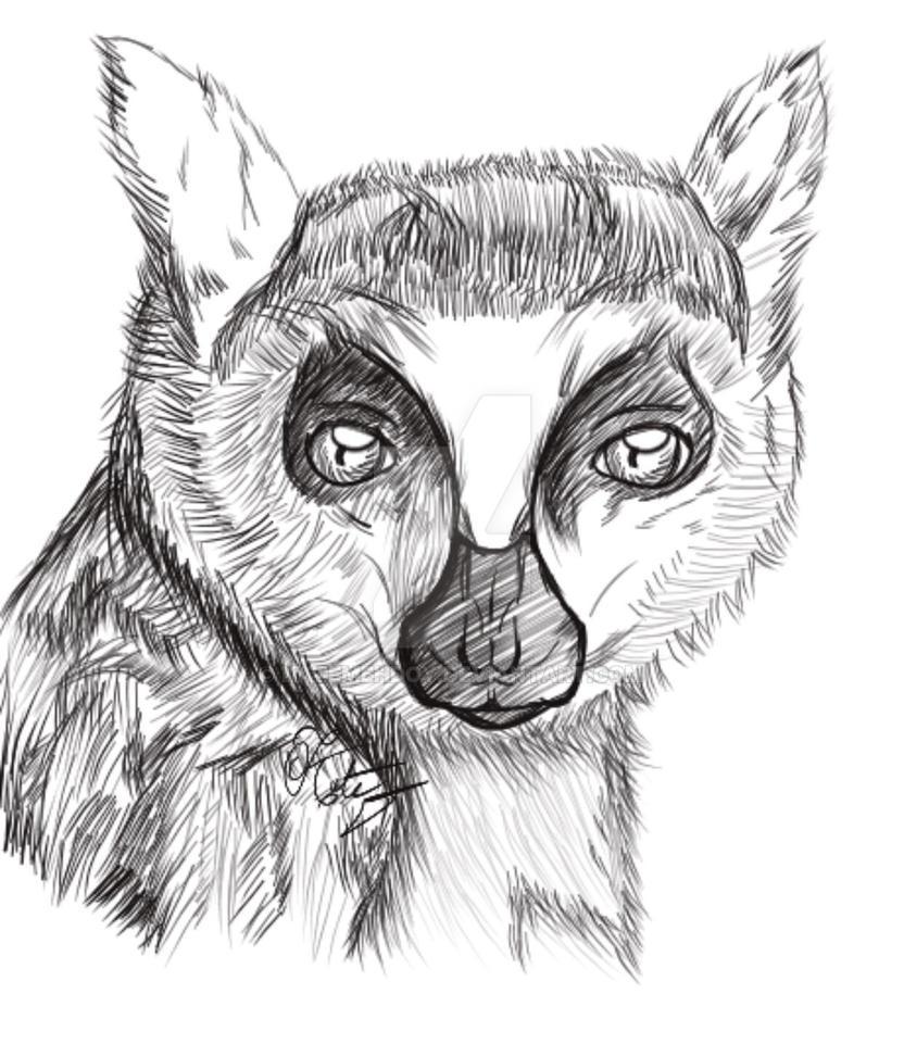 Realism lemur  by KateMehDoy