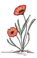 Pretty Poppy by greymattre