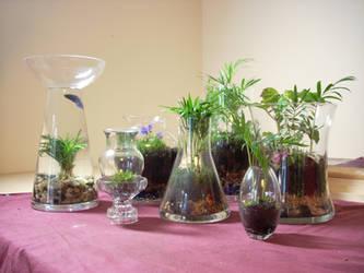 terrariums by greymattre