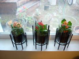 terrariums 2 by greymattre