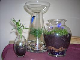 terrariums 3 by greymattre
