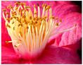 Flower2 by JamesFlynn23