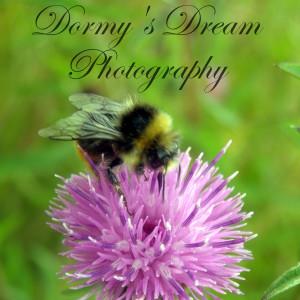 DormysDreamPhotos's Profile Picture