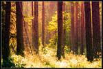 Piece of Woods