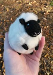 Fluffie - Black Faced Lancashire by SnowFox102