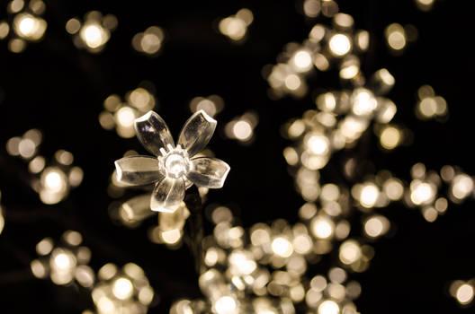 Crystal Bloom