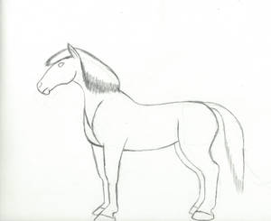 Horse Drawing Practice