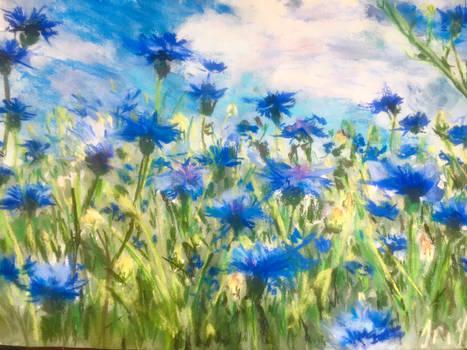 Blue field of silence