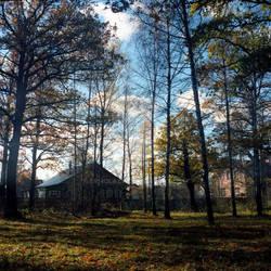 Morning in an oak grove