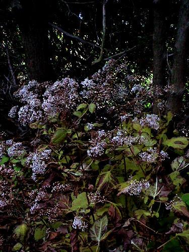 flowertree by emi-chan