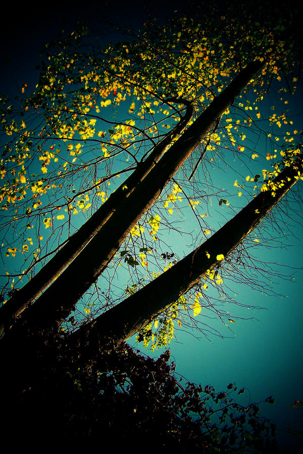 abstract nature by tangleduptight on deviantart