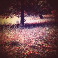 memory field by tangleduptight