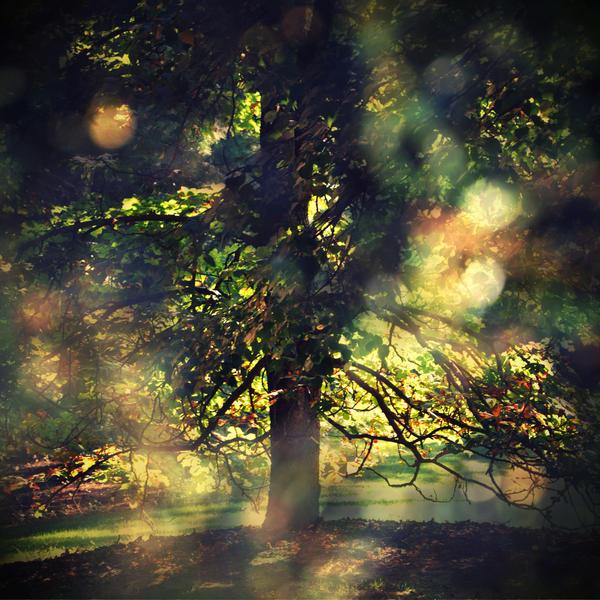 favorite tree by tangleduptight