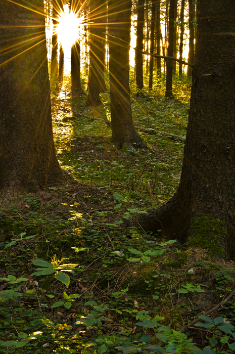 The Light In The Forest By Bull04 ... Design Inspirations