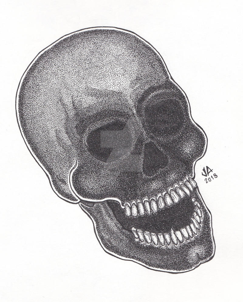 Skull Stippling Pen and Ink
