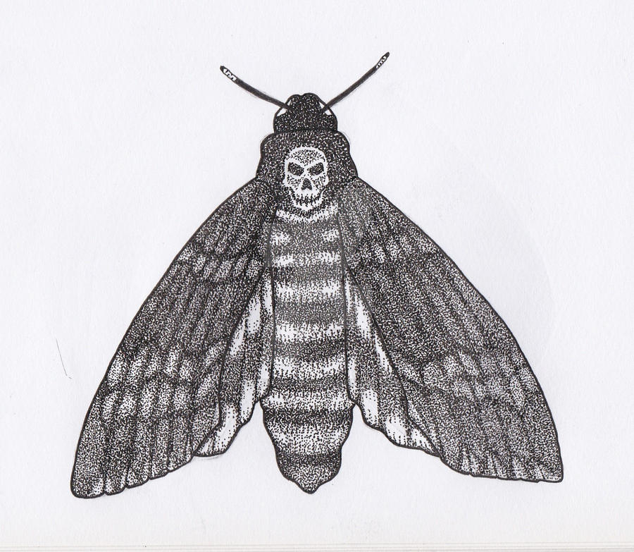 Death's-head Hawkmoth Pen and Ink Closed Wings