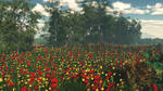 Mallorca poppies by anne1956