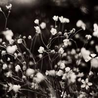 flower storm by EmirKurtaran
