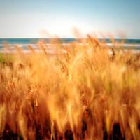 feel the wind by EmirKurtaran