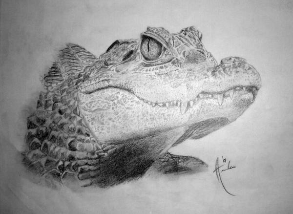 Caiman crocodile sketch by passionphyre on deviantart