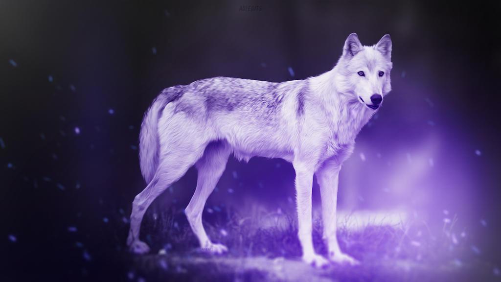 Lone Wolf Wallpaper By Adi 149