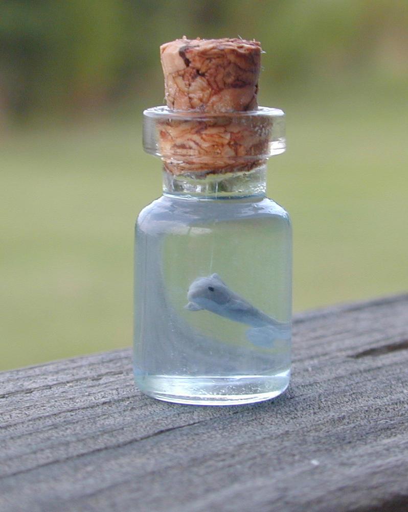 Tiny Dolphin in Bottle by jen4eternity