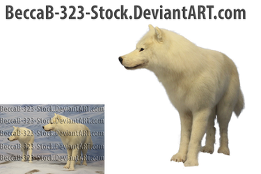 White Wolf PNG Stock by BeccaB-323-STOCK