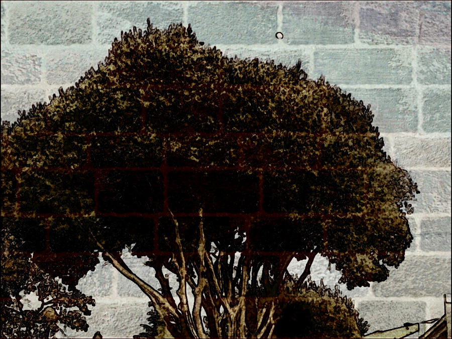 Wall tree by Bohax