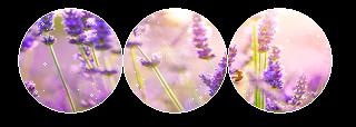 https://orig00.deviantart.net/7909/f/2016/108/e/4/lavender_divider_by_tiny_forest_prince-d9zbpem.png