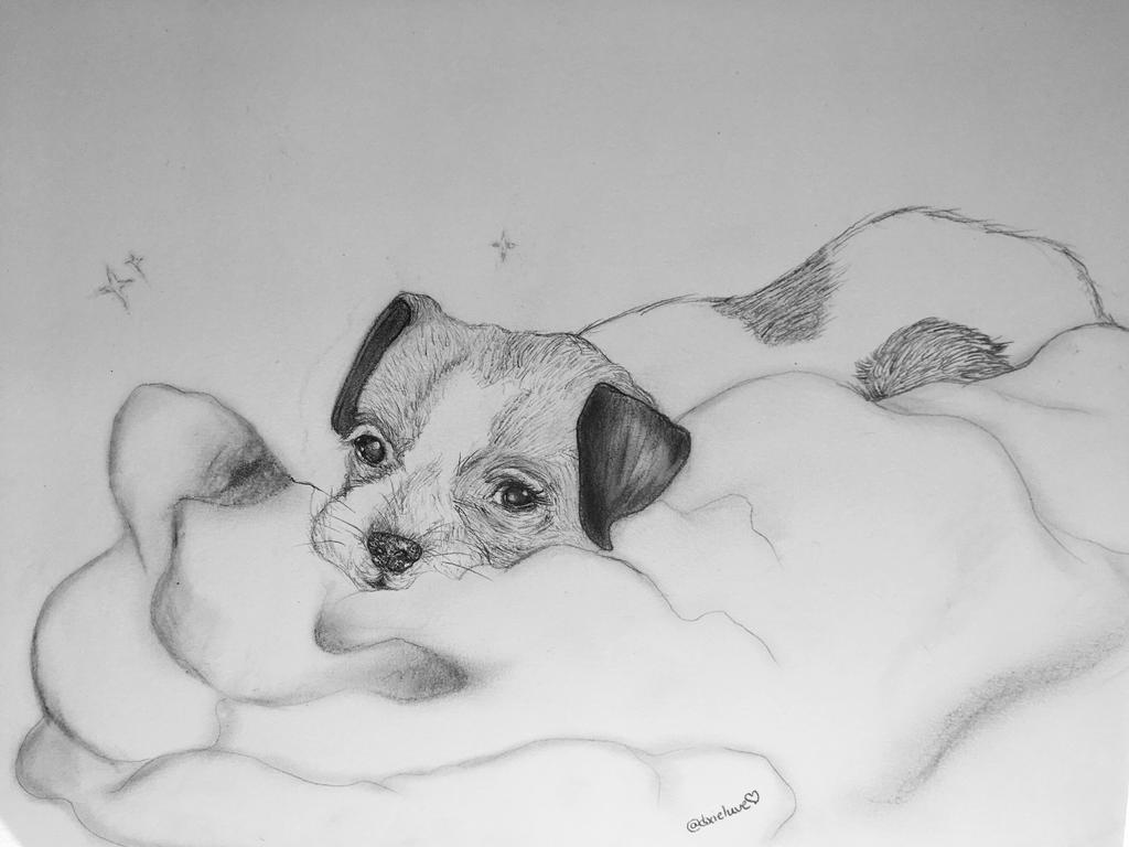 Pet Portrait! by DixieLuve