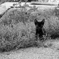 kitten by SorinDanut