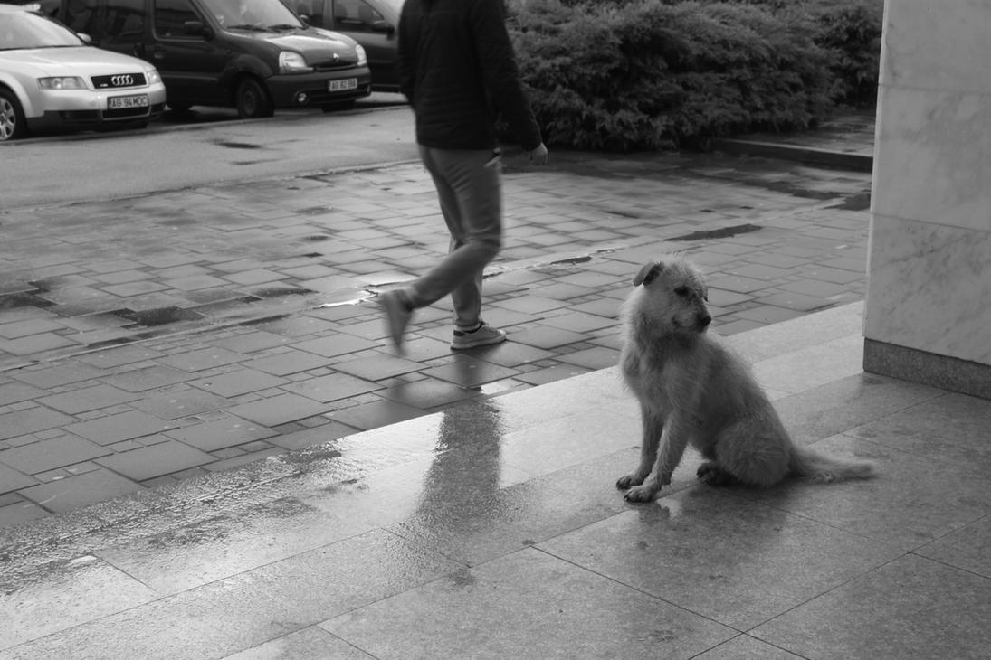 man and dog by SorinDanut