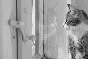 twin cat by SorinDanut