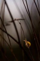 Snailrise by Kriloner