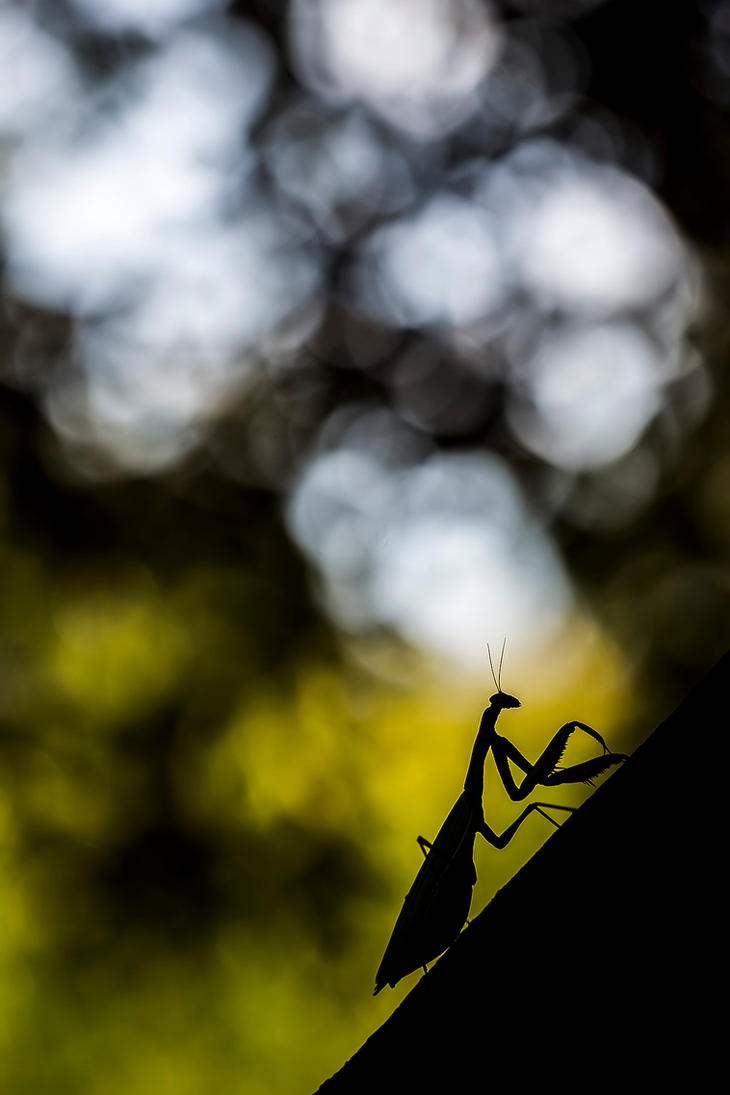 Mantis again, and again, and again... by Kriloner