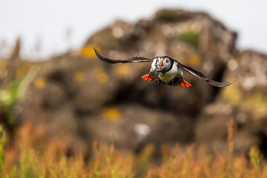Landing by Kriloner