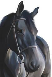 Horse digital artwork