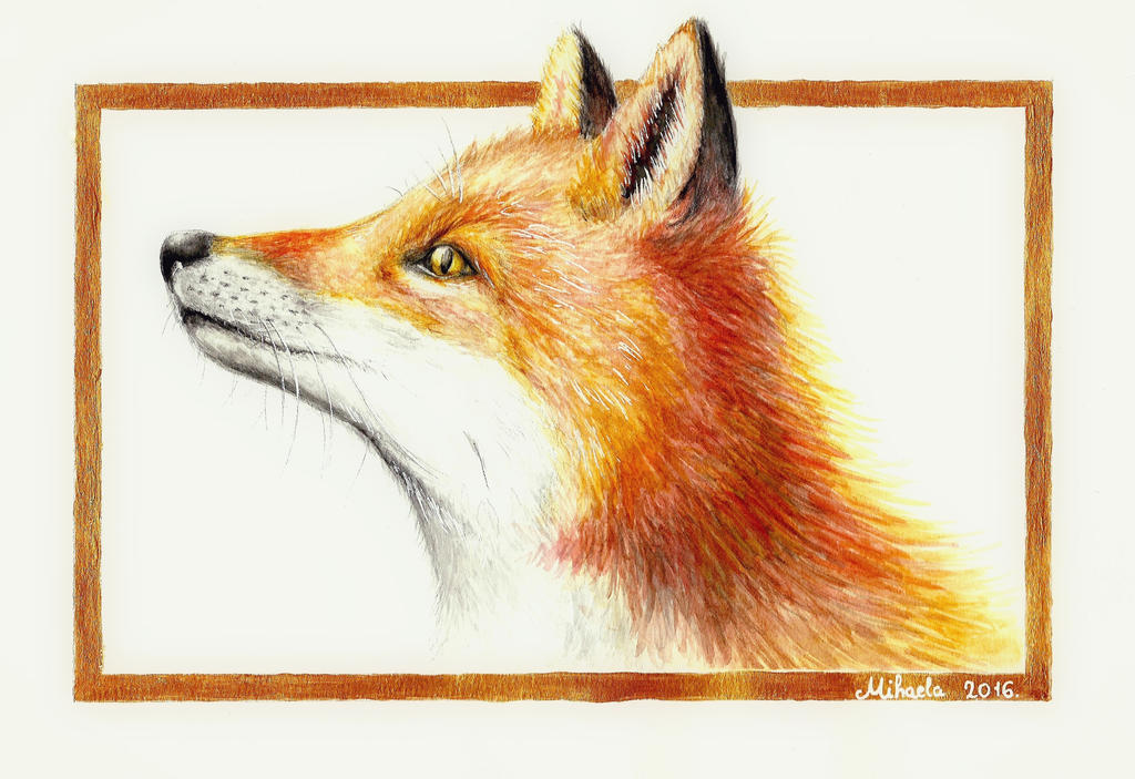 Watercolor fox by red-fox-child