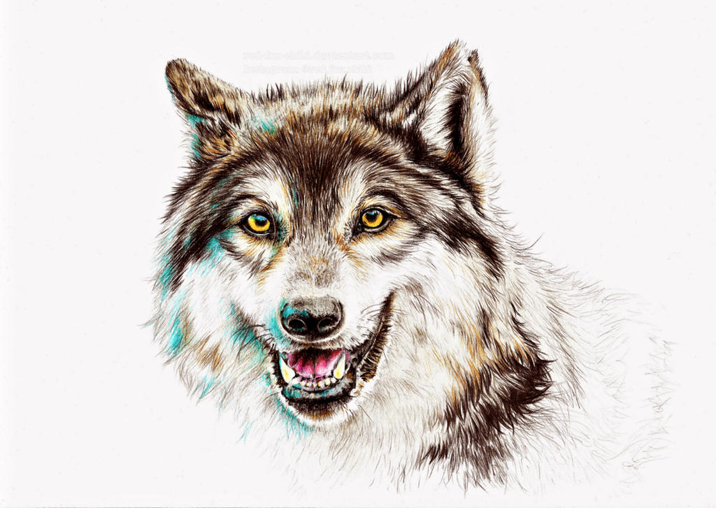 Wolf drawing by red-fox-child