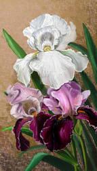 Iris by IronMouse86