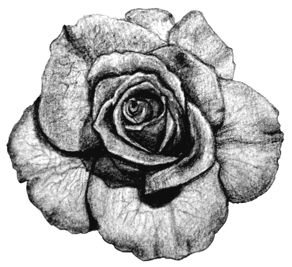 Rose Tattoo 1 X 1 Pencil On Paper By Kagome357 On DeviantArt