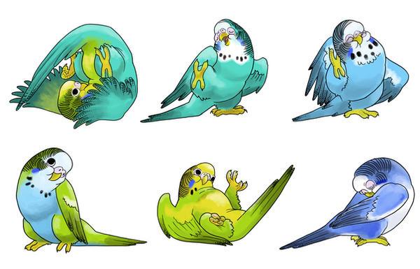 Cute-Ass Parakeets By Vagrantvulpes On DeviantArt