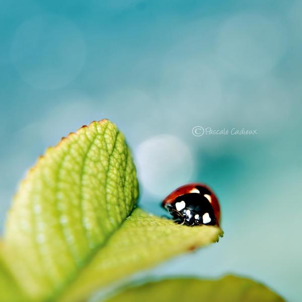 Ladybug by fruitpunch1
