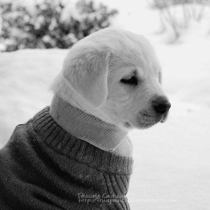 Puppy Love by fruitpunch1