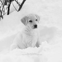 Puppy love II by fruitpunch1