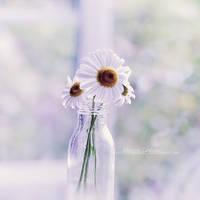 Daisy by fruitpunch1
